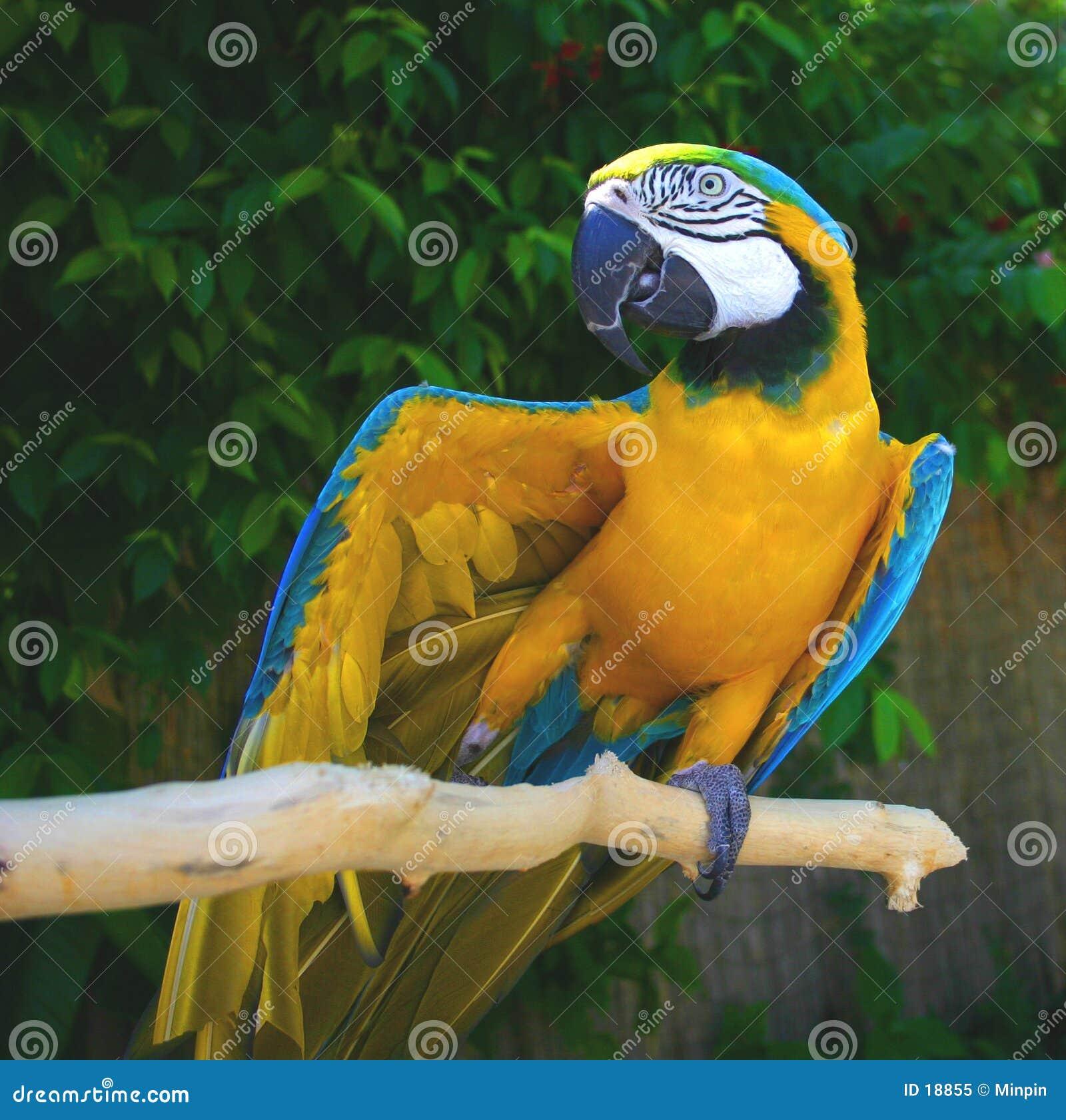 Maximal der Papagei - vorführend!