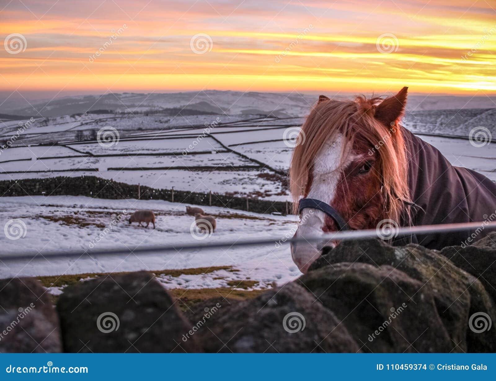 Maximal områdeslantgård för häst