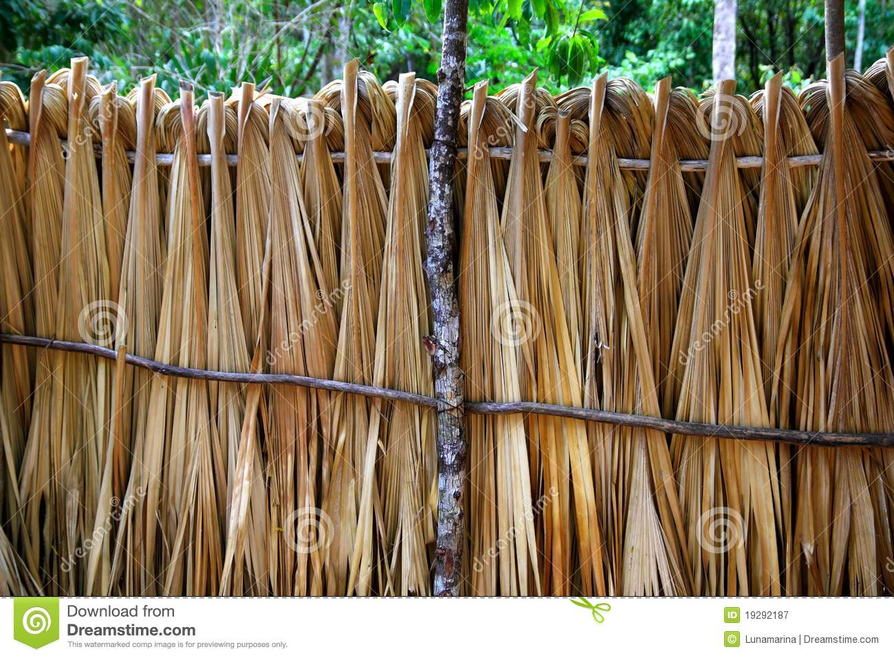 Mayan palm tree leaves wood fence in rainforest stock