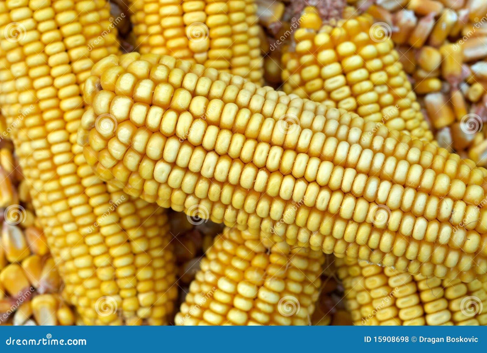 Mazorca de maiz una mazorca de maz u vector de stock for Como cocinar mazorcas de maiz