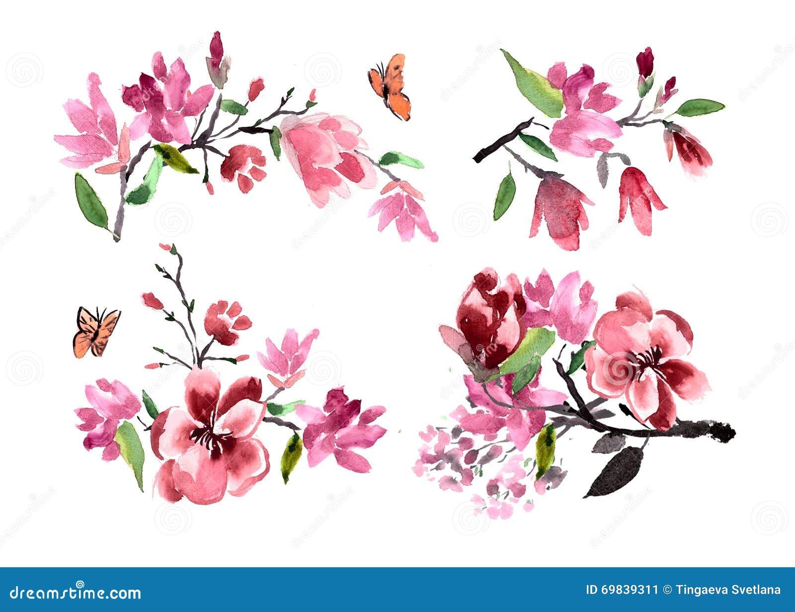 Mazzi dell 39 acquerello della magnolia dei fiori dipinto for Magnolia pianta prezzi