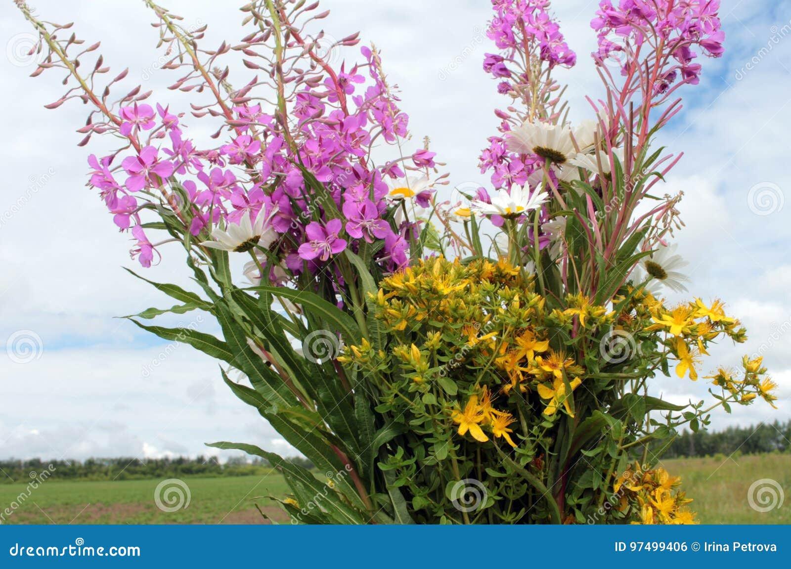 Mazzo dei fiori del campo contro il cielo