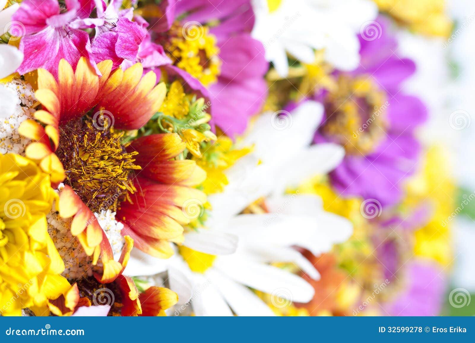Mazzo dei fiori selvaggi