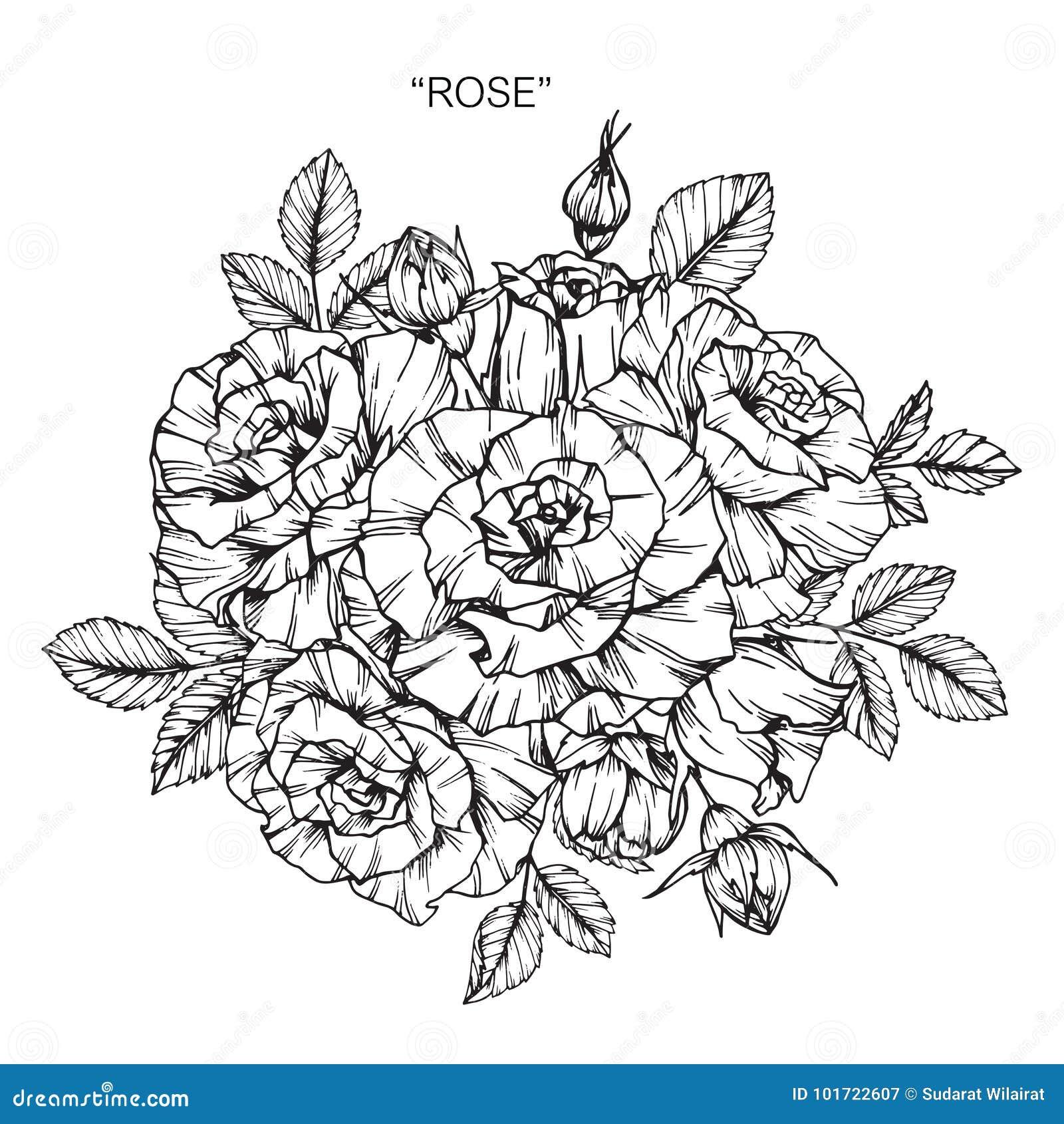 Mazzo Del Disegno E Dello Schizzo Del Fiore Di Rosa Illustrazione Di