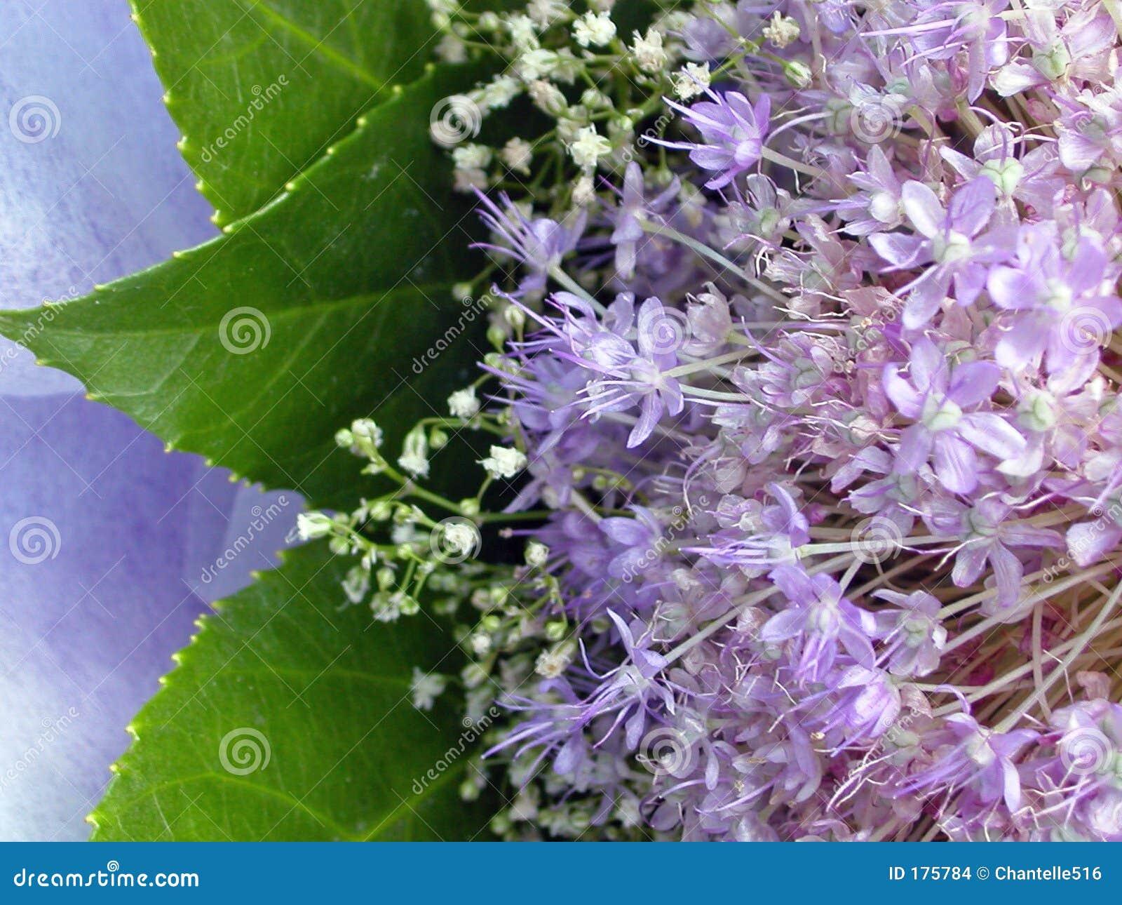 Mazzo del fiore