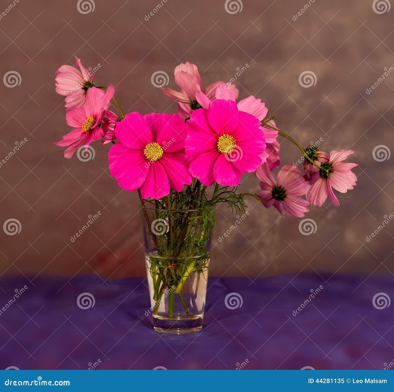Mazzo Del Fiore Di Cosmea Immagine Stock Immagine Di Gelo 44281135