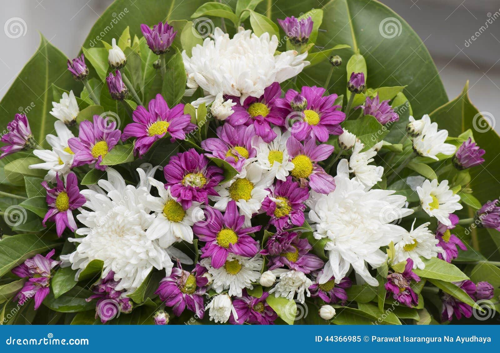 Mazzo del fiore di Dendranthemum