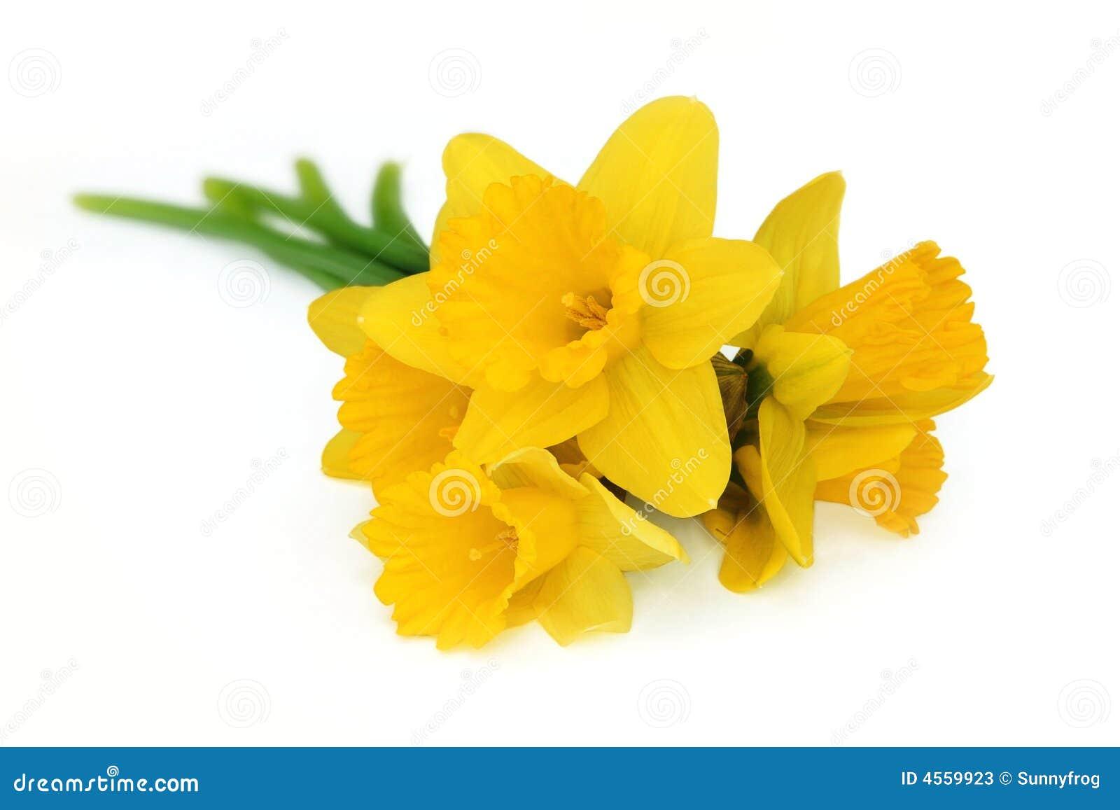 mazzo del narciso giallo fotografie stock immagine 4559923