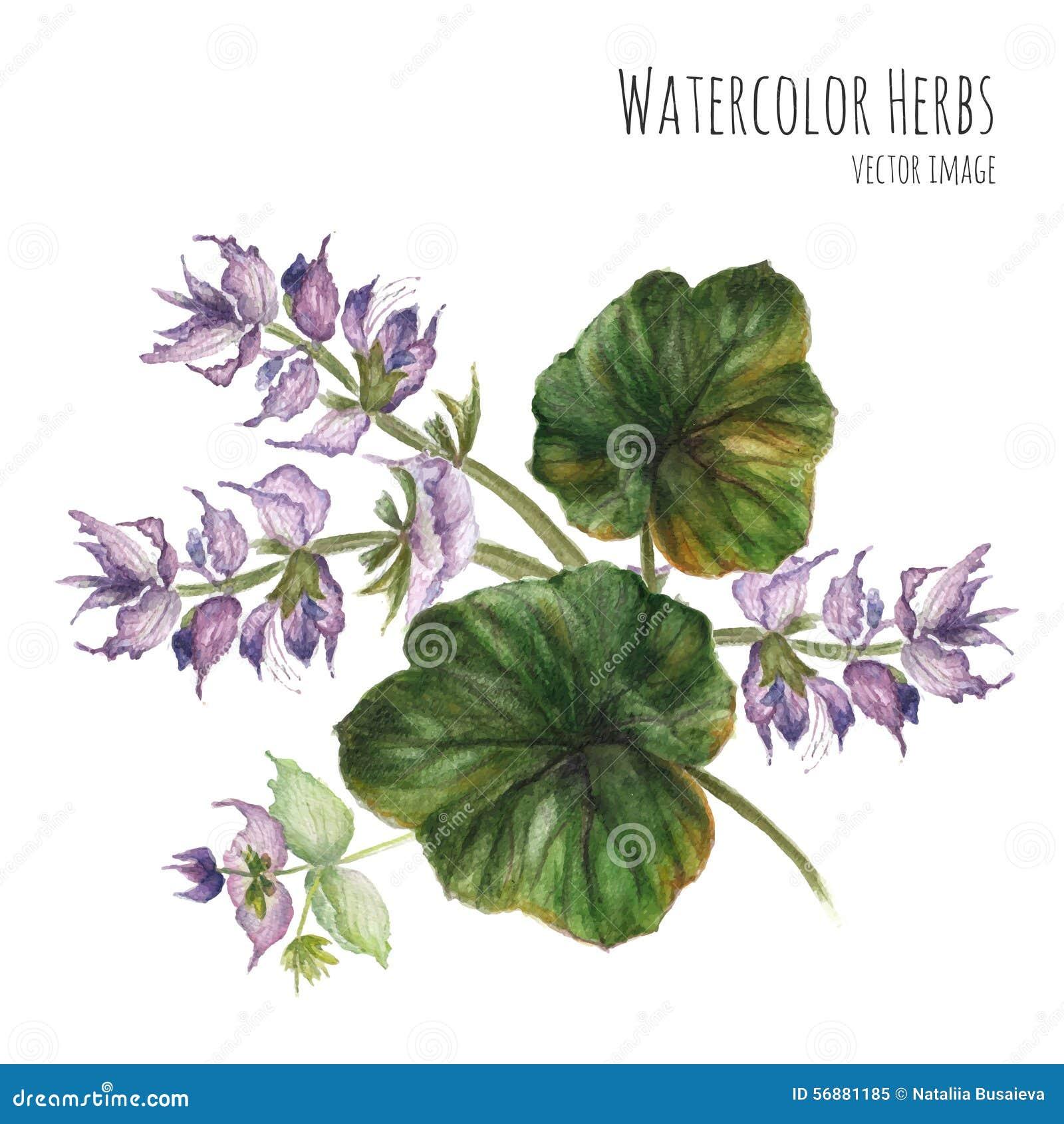 Mazzo del wildflower porpora