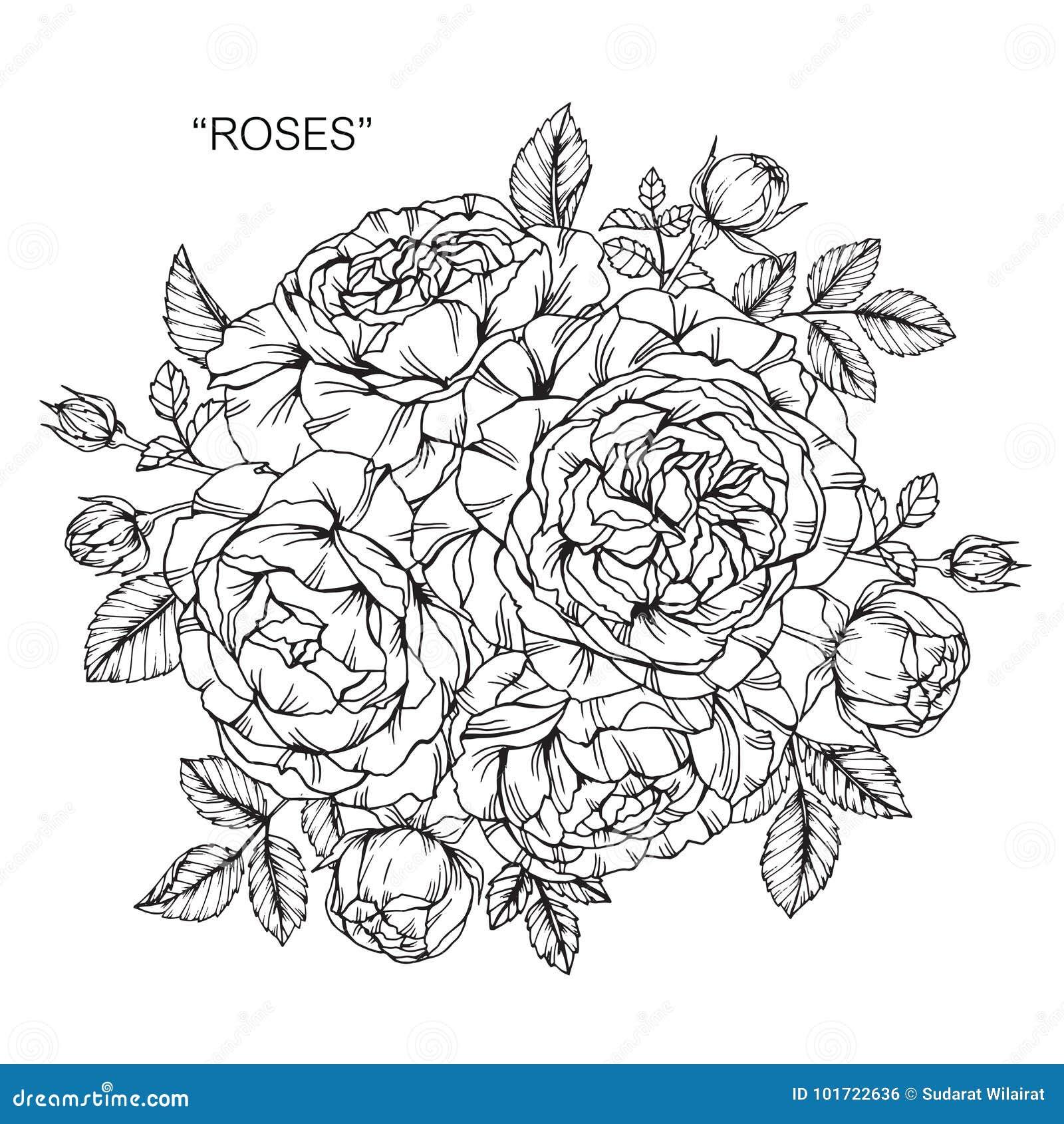 Mazzo Di Disegno E Dello Schizzo Rosa Dei Fiori Illustrazione Di