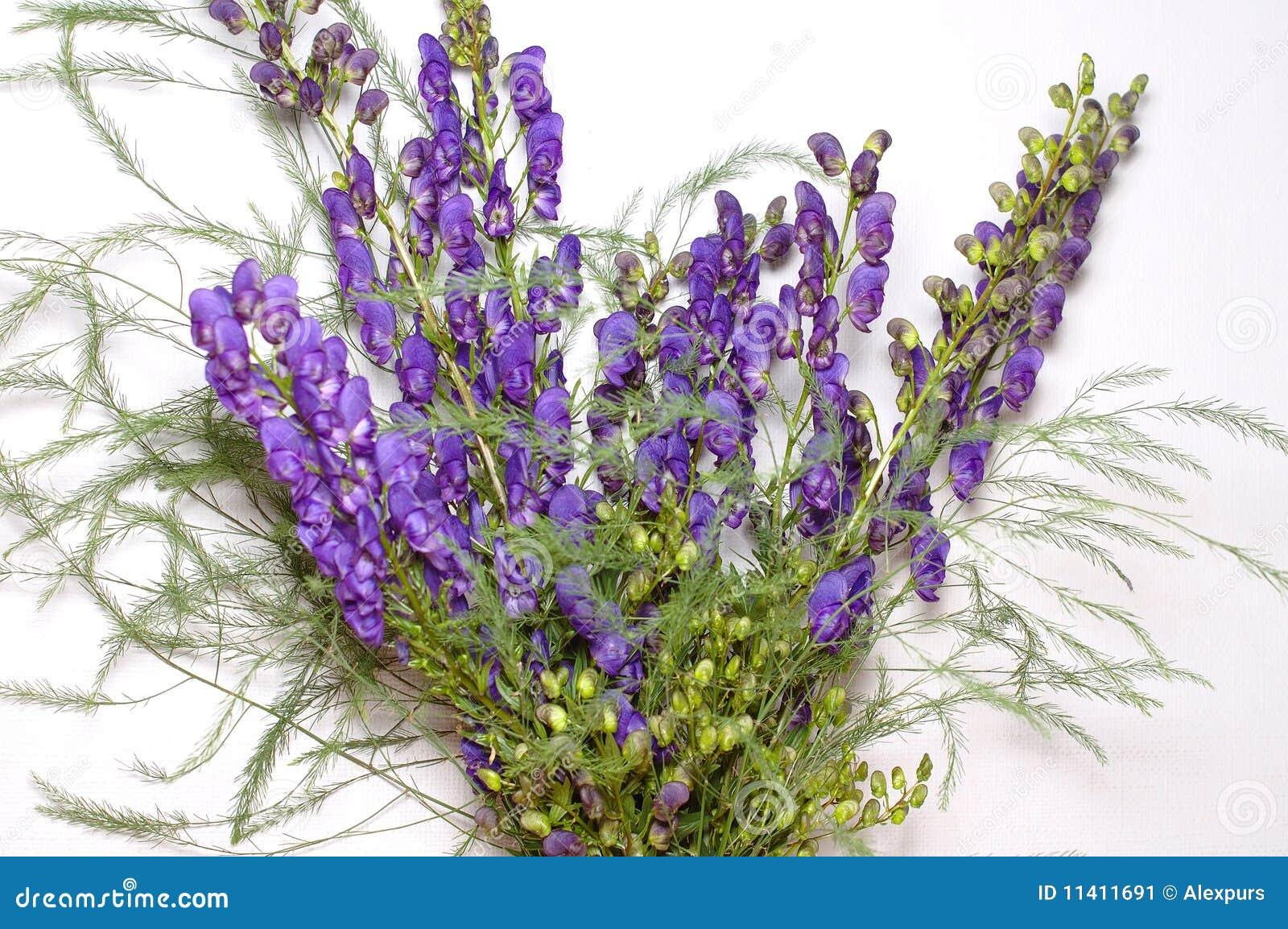 Mazzo di fiori blu del campo mazzo immagine stock for Progetti di costruzione del mazzo