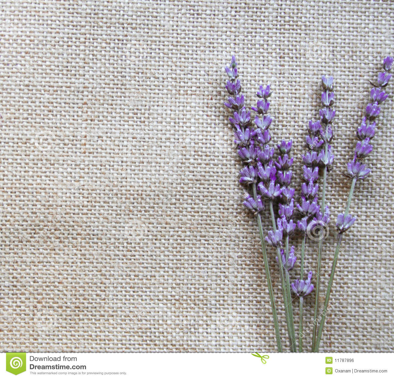 Mazzo di fiori lilla della lavanda su tela di sacco for Fiori di lavanda