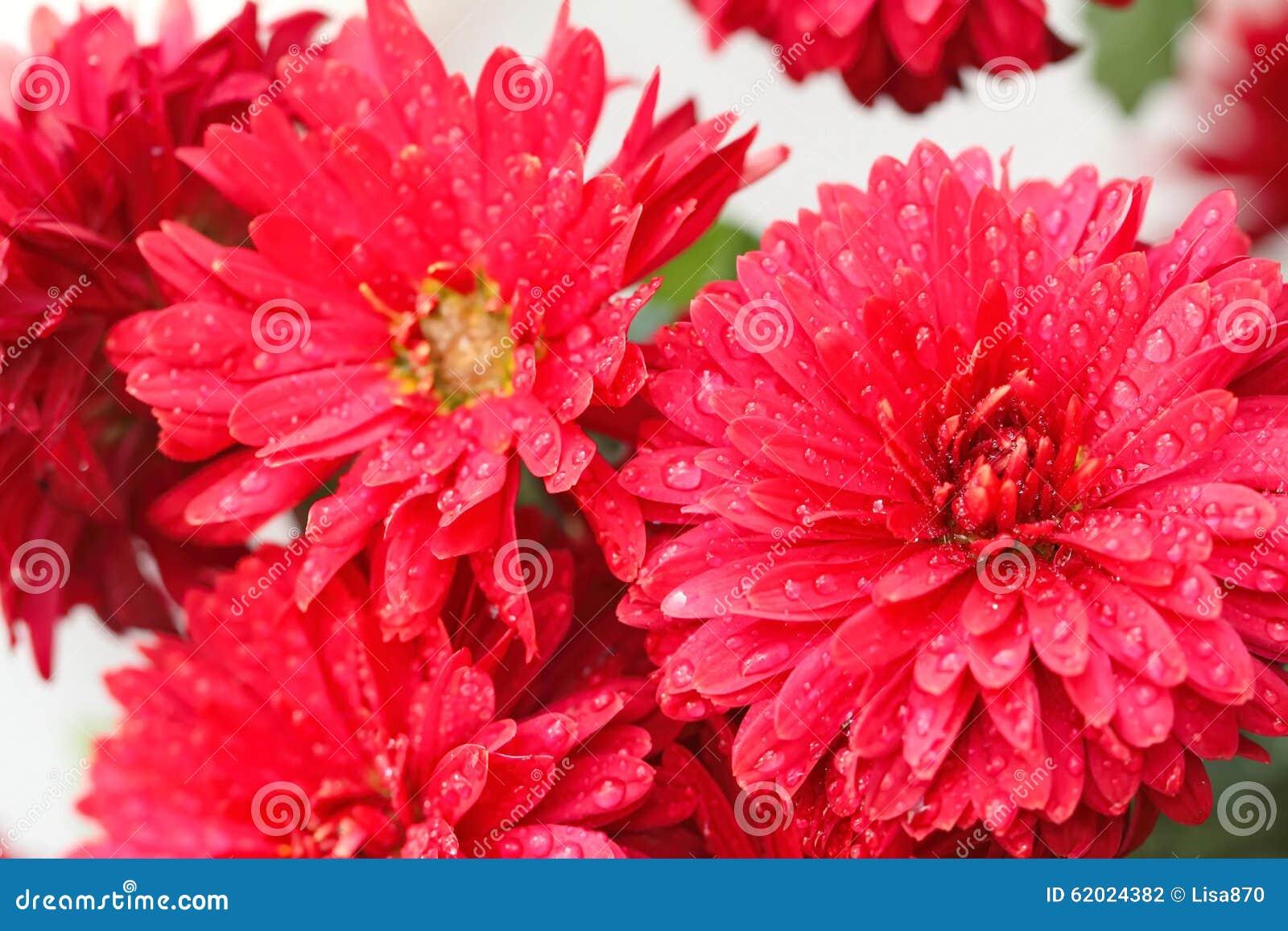 tipi di fiori rossi