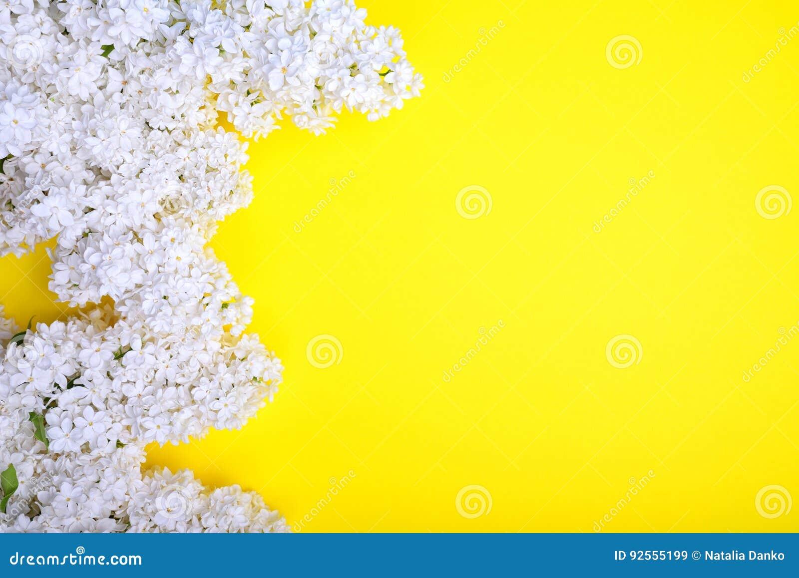Mazzo di fioritura del lillà bianco