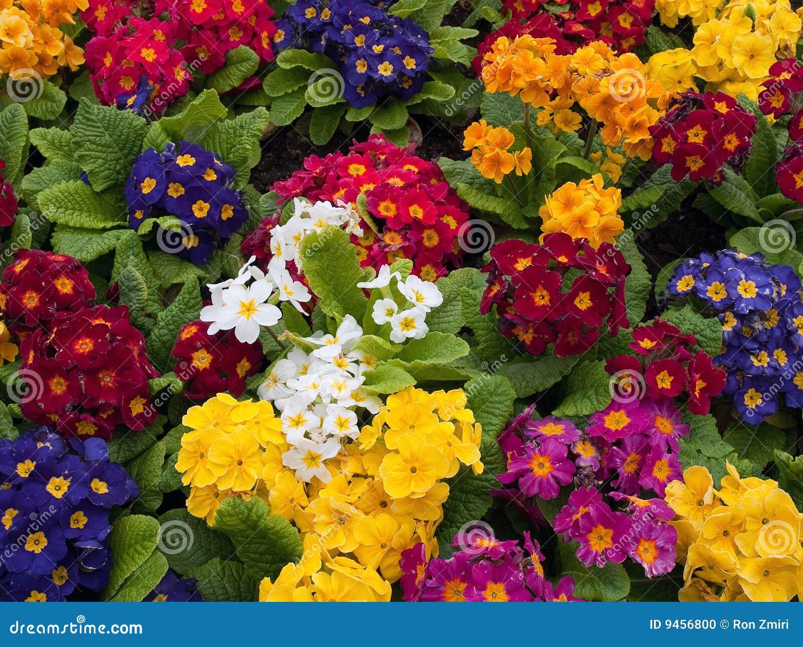 Mazzo di multi fiori colorati organizzati insieme for Fiori stilizzati colorati