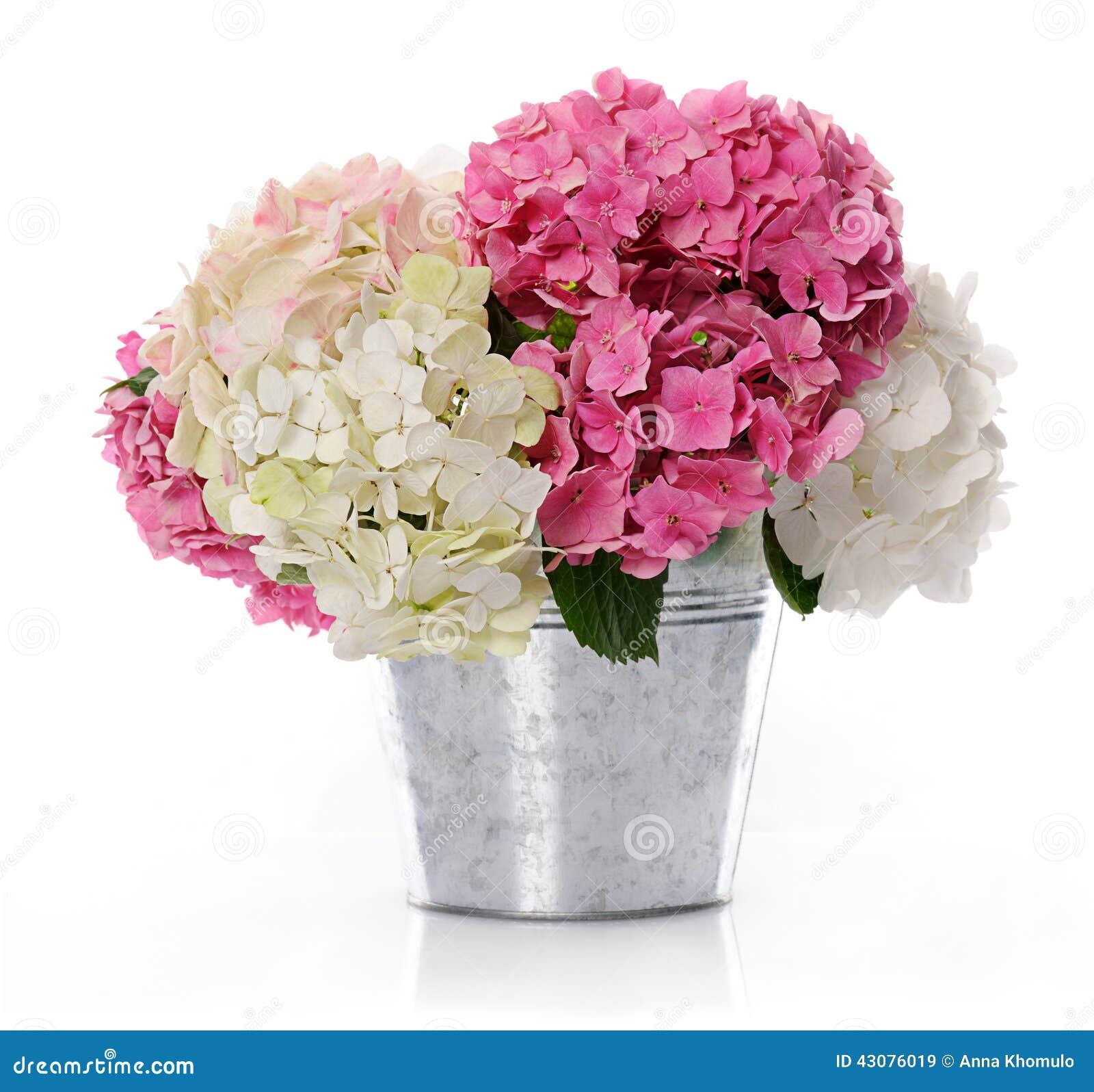 Mazzo di ortensia fotografia stock immagine 43076019 for Ortensie in vaso