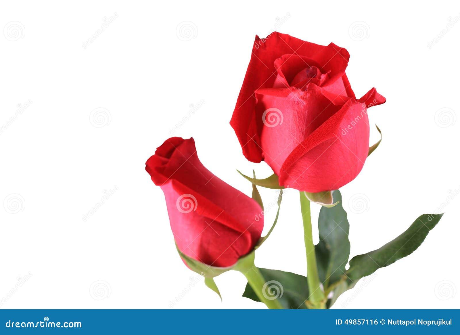 Mazzo di rose rosse fotografia stock immagine di elemento for Foto di rose bellissime