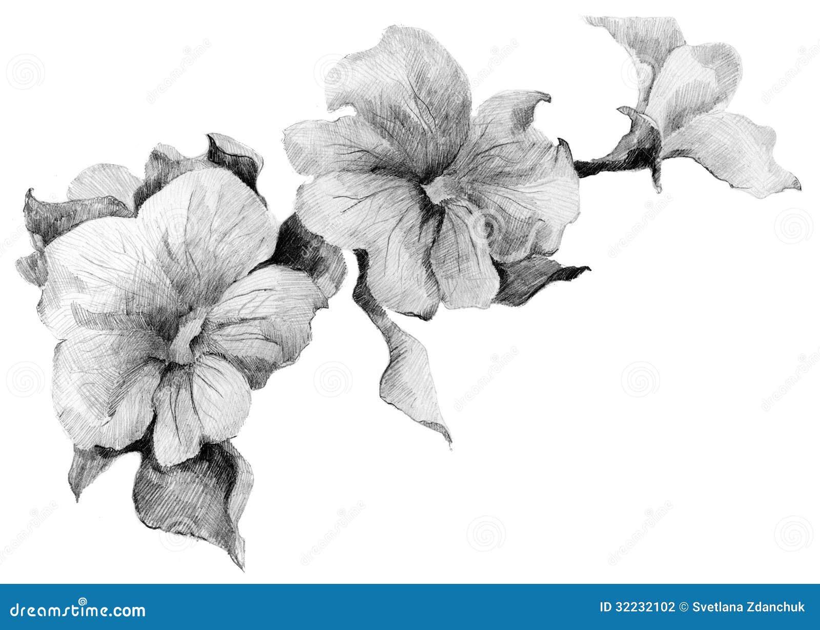 Mazzo di schizzo della petunia del fiore fotografia stock for Progetti di costruzione del mazzo