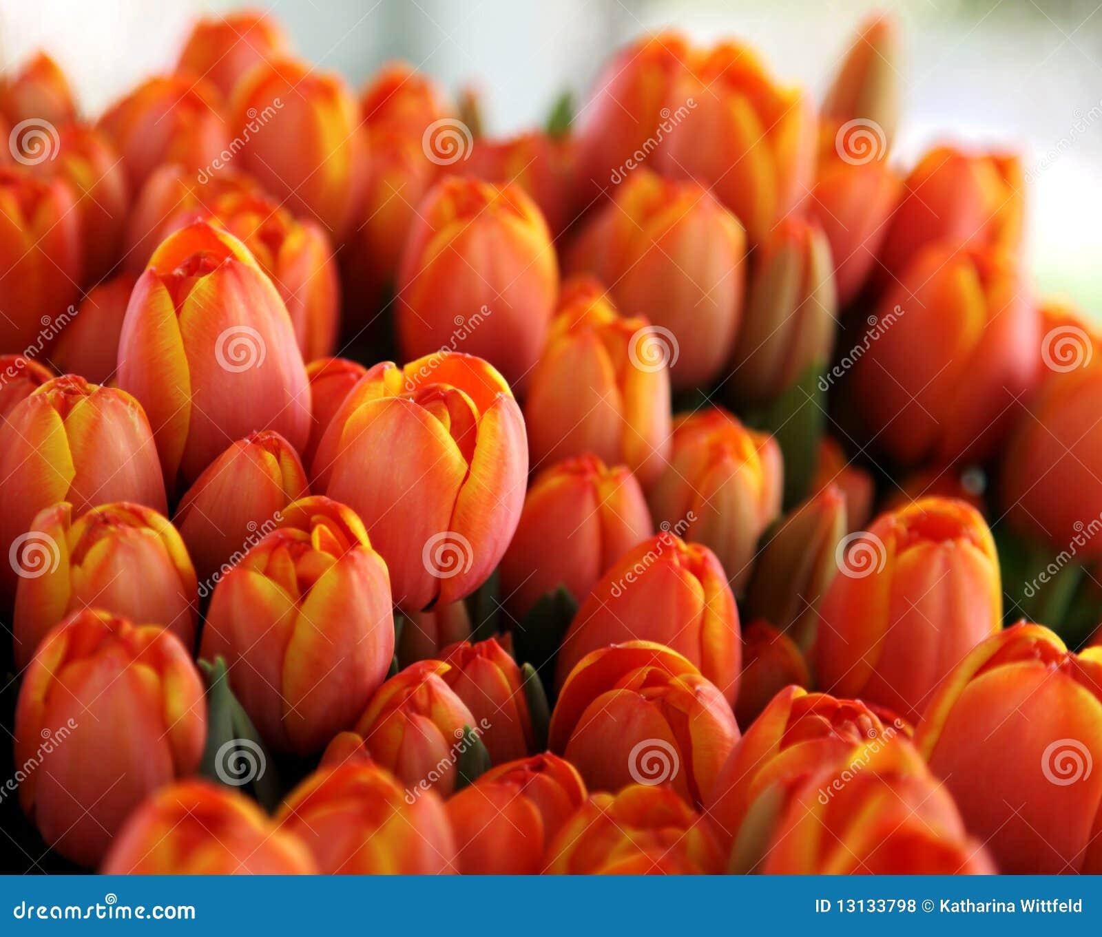 Mazzo di tulipani arancioni e gialli fotografia stock for Tulipani arancioni