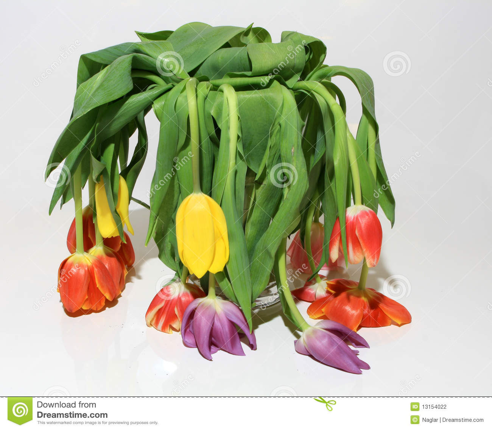 Mazzo guasto del fiore del tulipano fotografia stock for Progetti di costruzione del mazzo