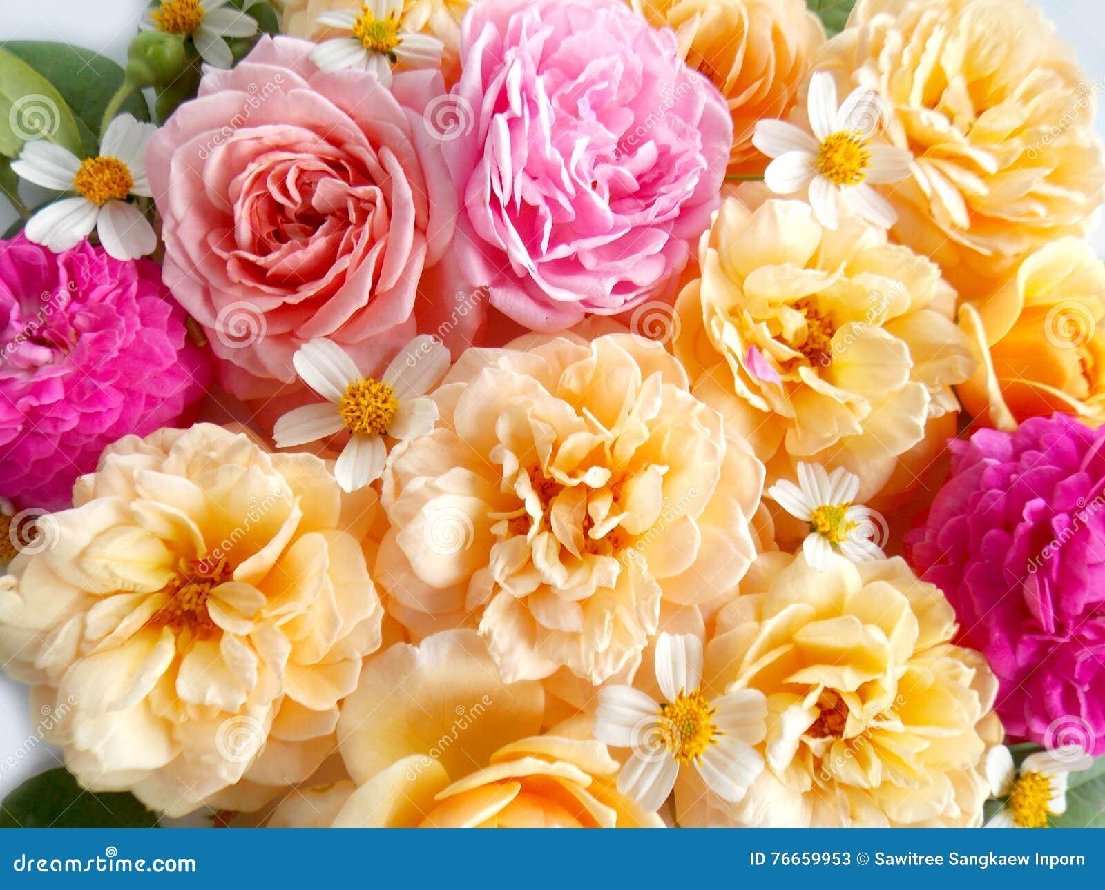 Mazzo Di Fiori Un Inglese.Mazzo Rosa Del Fiore Di Bello Inglese Immagine Stock Immagine Di