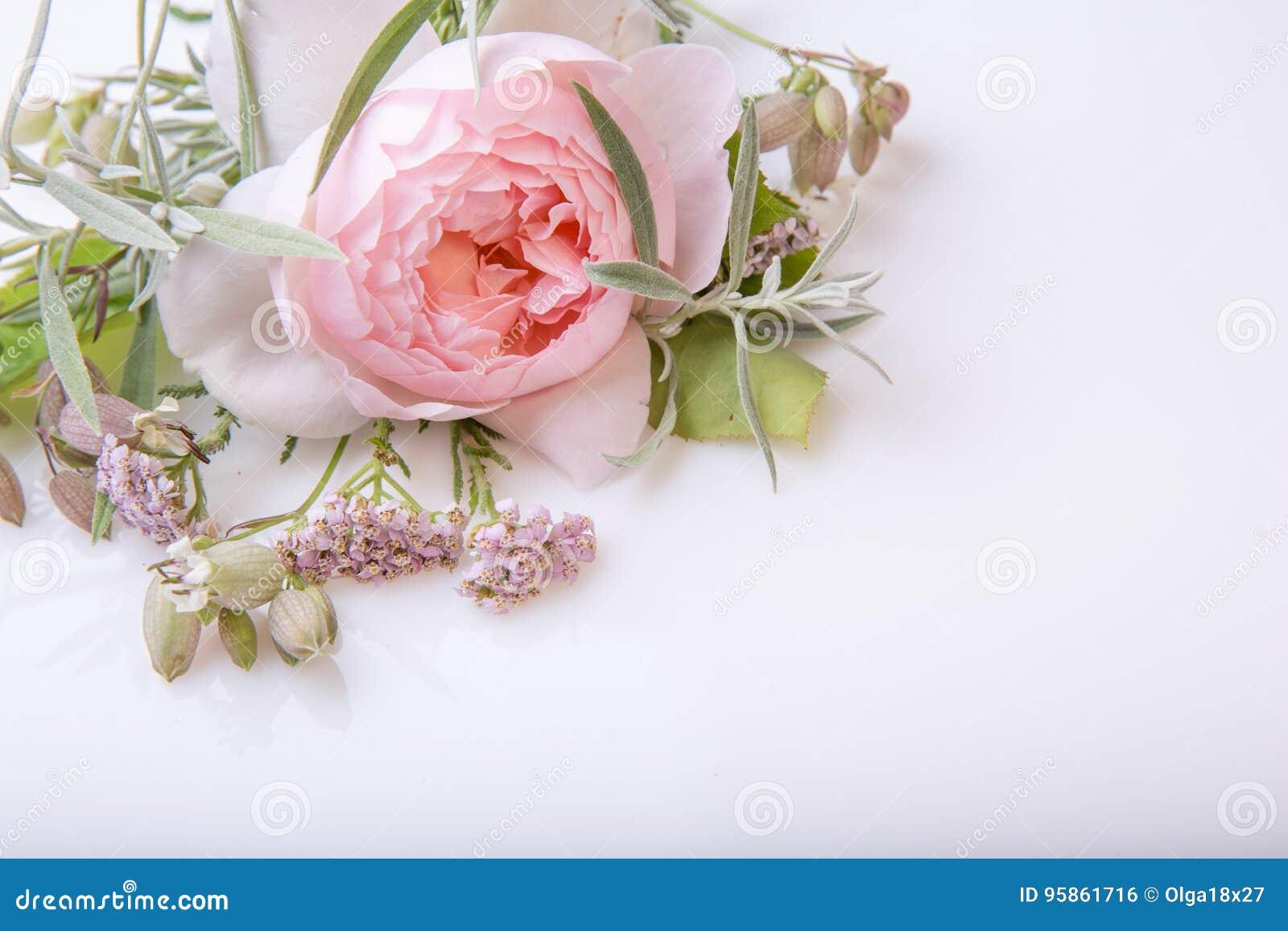 Mazzo Di Fiori Un Inglese.Mazzo Rosa Del Fiore Di Bello Inglese Su Fondo Bianco Fotografia