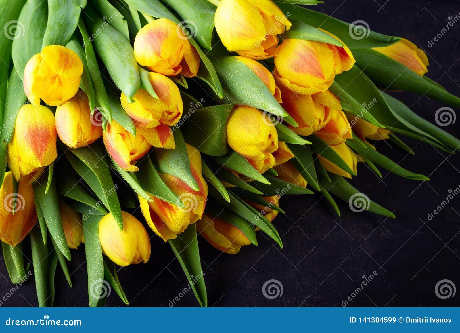 Mazzo rosso giallo dei tulipani del fiore della primavera