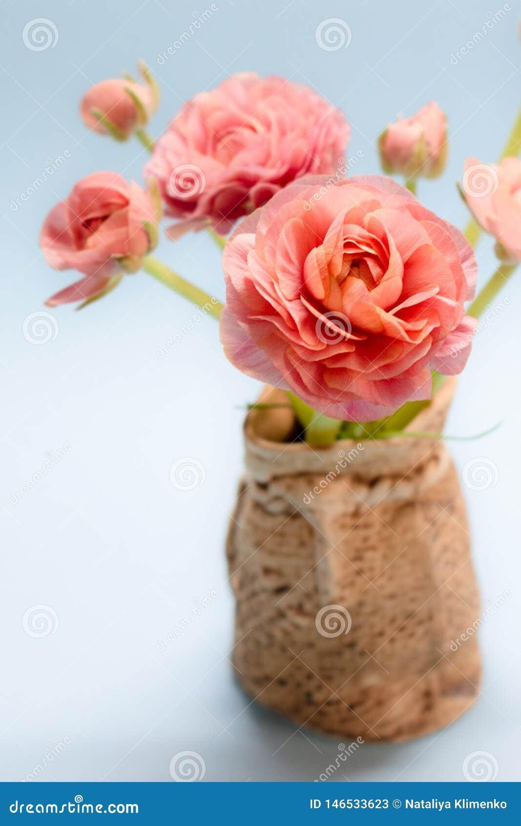 Mazzo sveglio dei ranunculus rosa delicati su un fondo blu