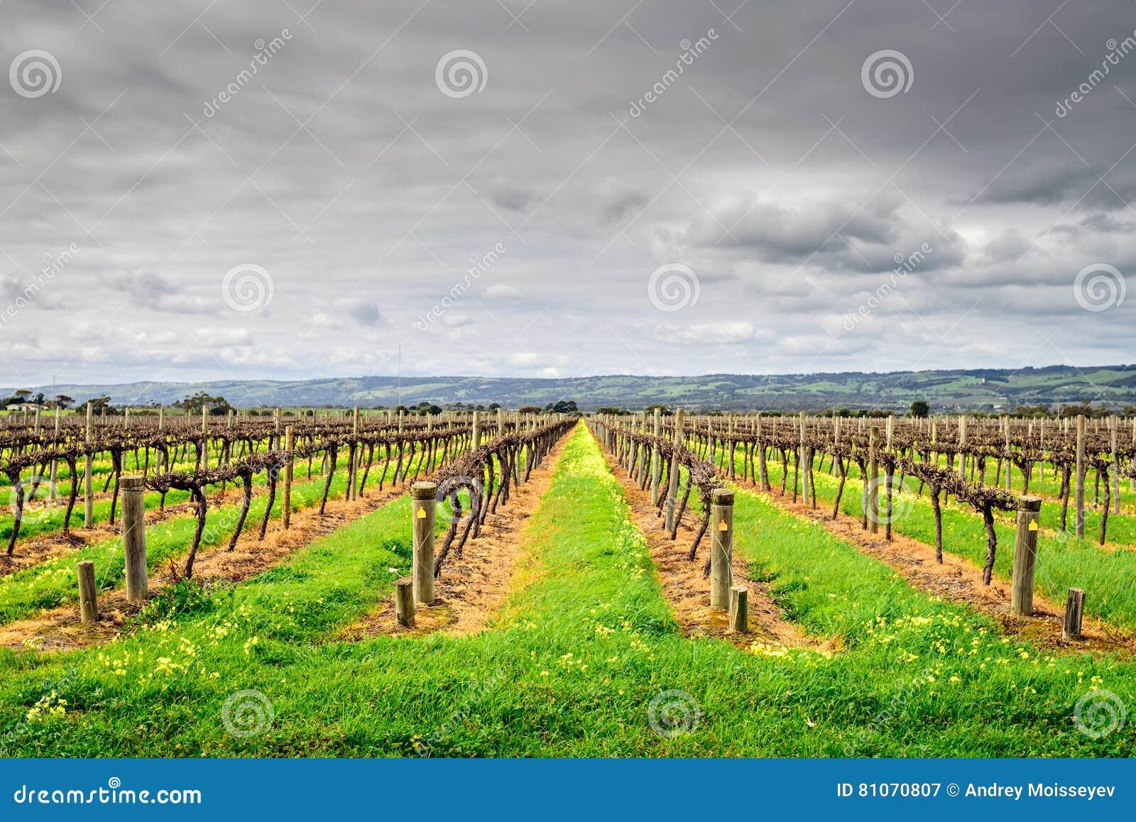 Mclaren Vale Wineries Stock Photo Image 81070807