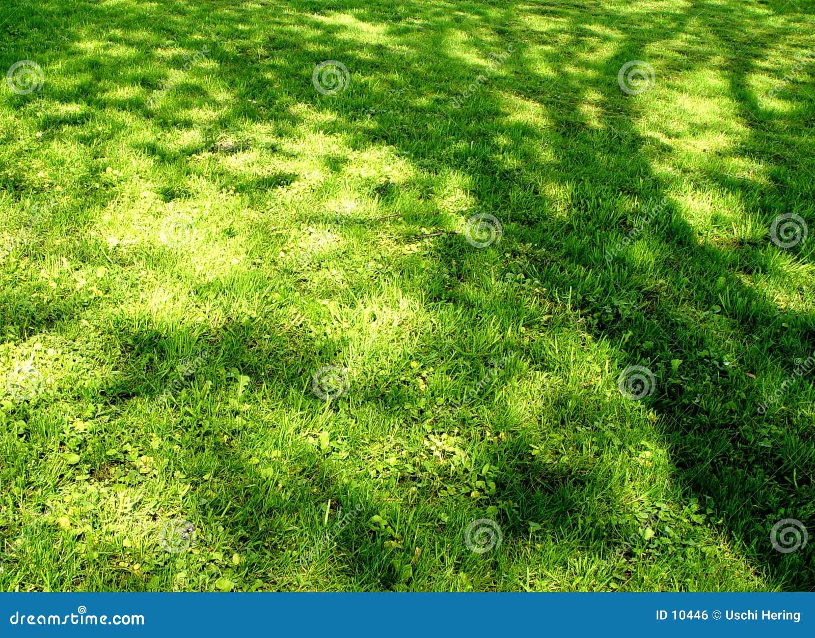 Meadow cień.