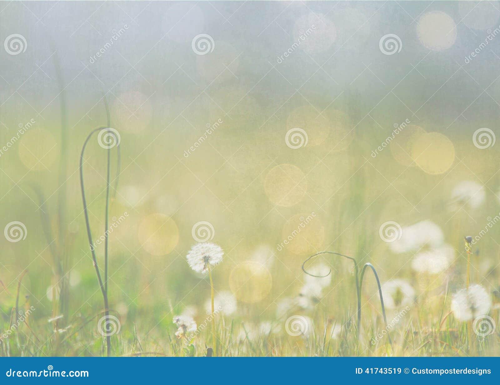 Download A meadow of dandelions. stock image. Image of focus, design - 41743519