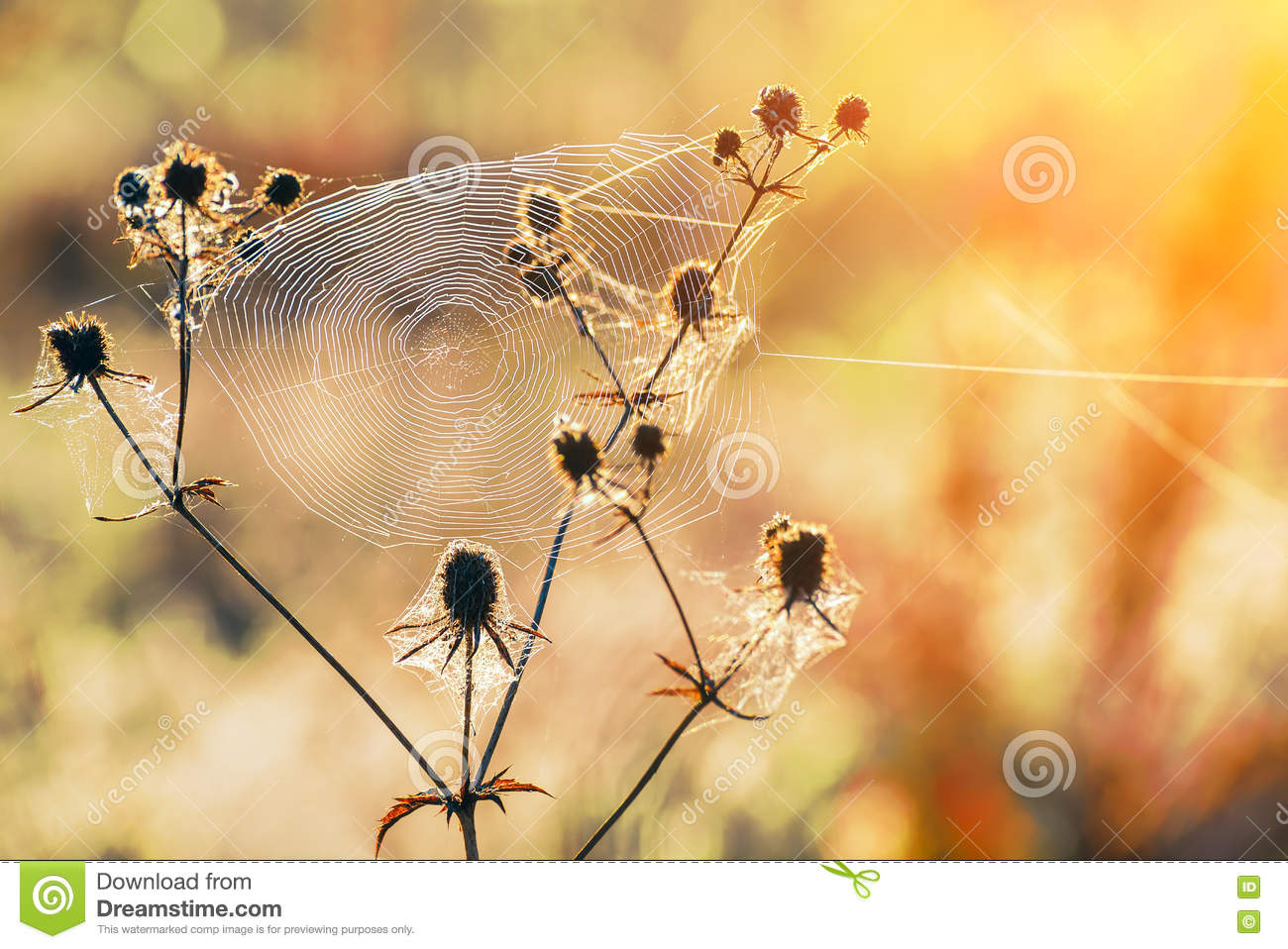 meadow at dawn flowers and cobwebs stock photo cobweb clip art background cobweb clipart