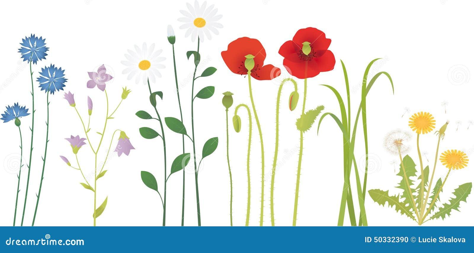 Meadow Flowers Stock Vector - Image: 50332390