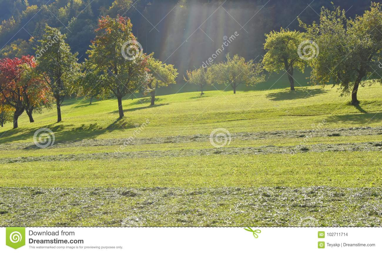 Meadow with fruit trees