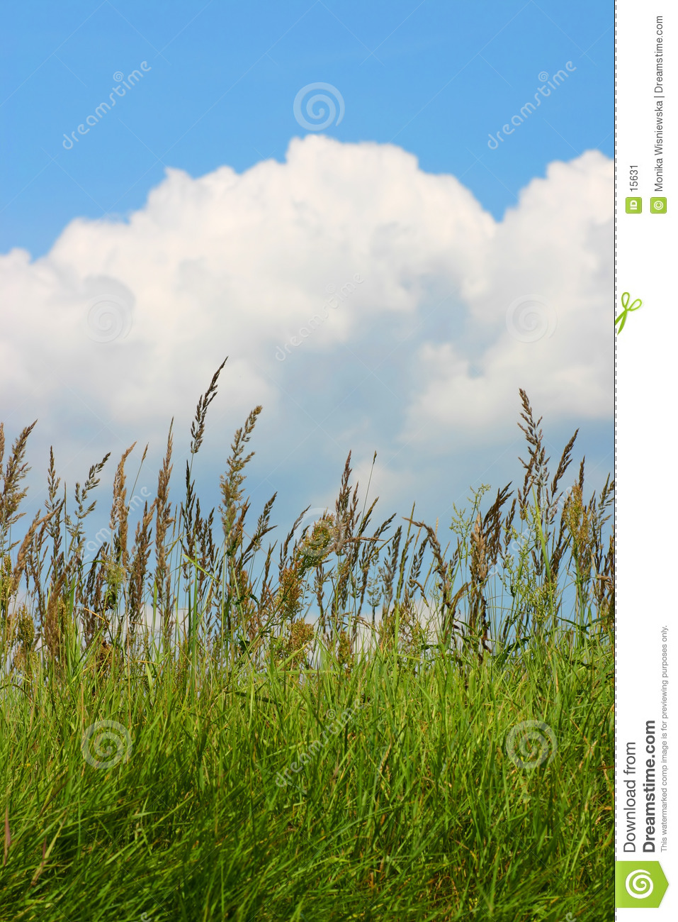 Meadow grass and a blue cloudy sky
