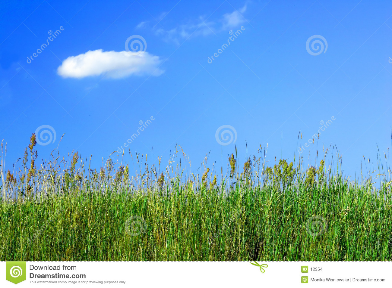 Meadow grass and a blue sky