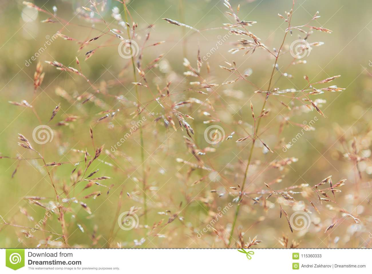 Bluegrass Meadow: Description and Use 6