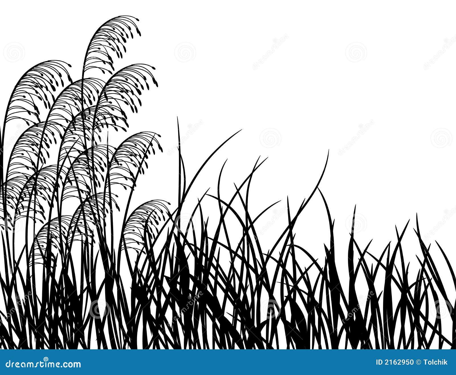 Meadow grass, vector stock vector. Illustration of flower - 2162950