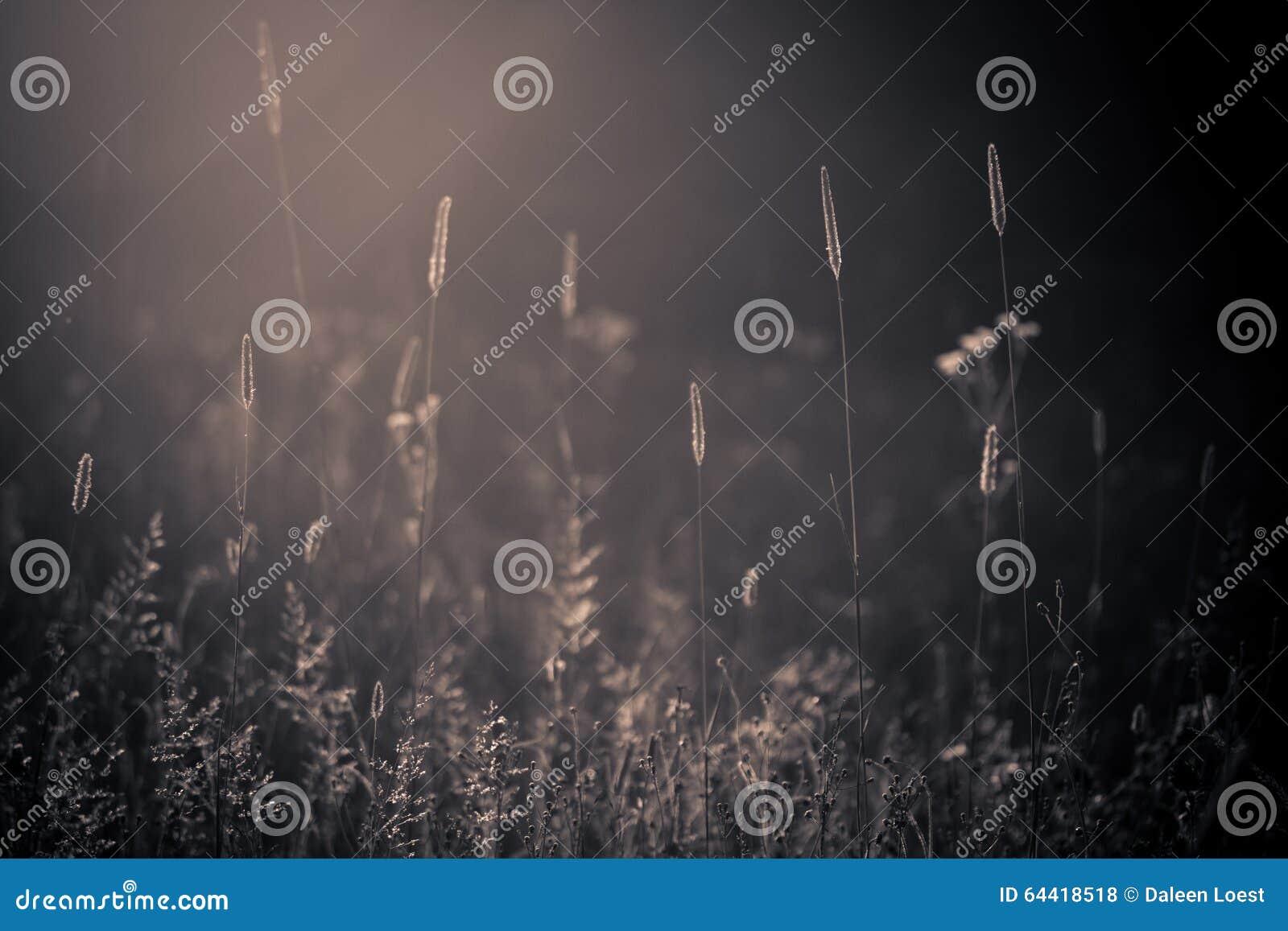 Meadow lato dziki