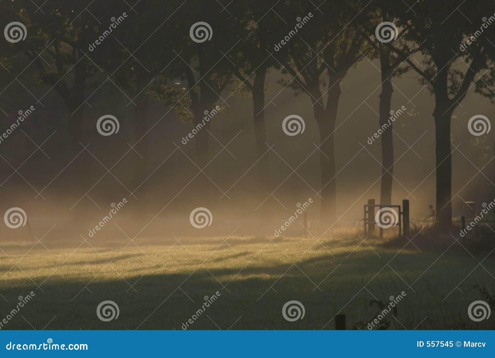 Meadow mgłowa nad lśniącej słońce