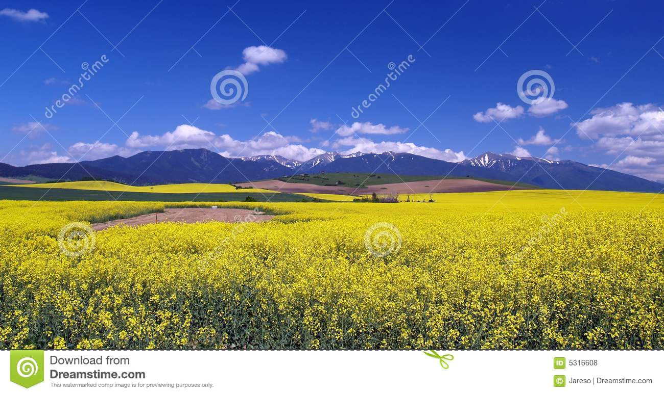 Meadow and mountains