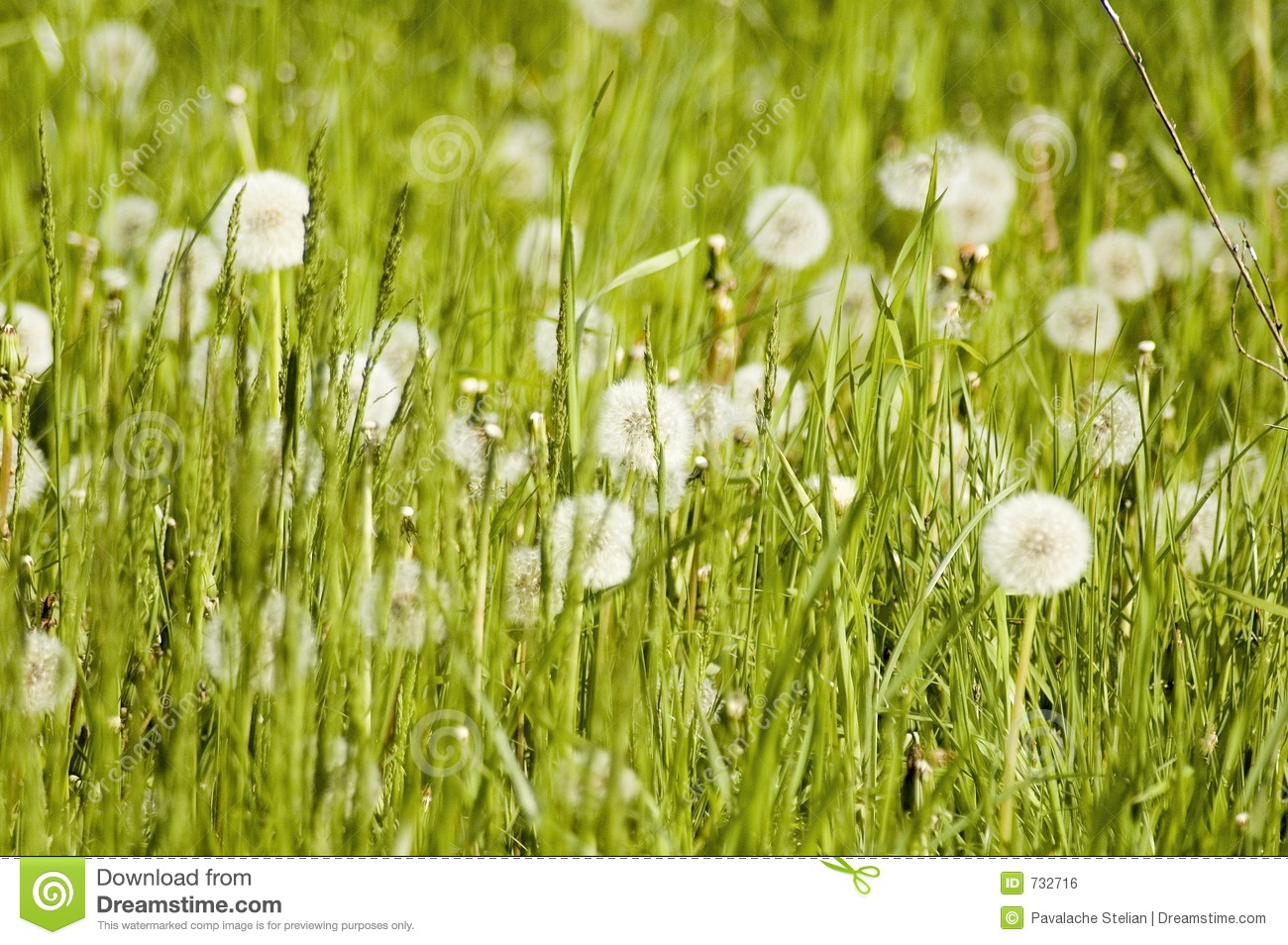 1000  images about Meadows on Pinterest | Gardens, Perennials and ...