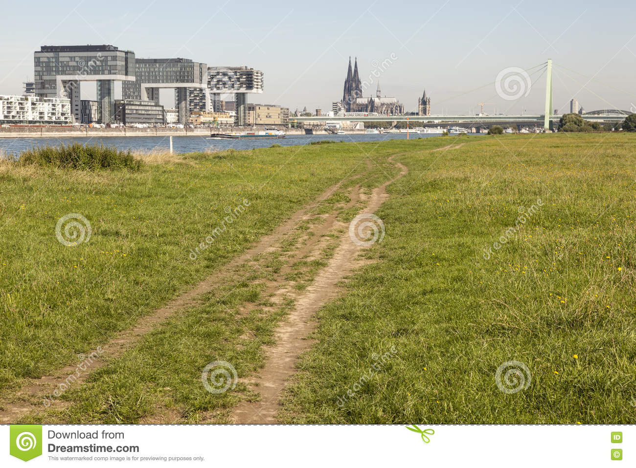 Meadow on the Rhine river bank in Cologne, Germany