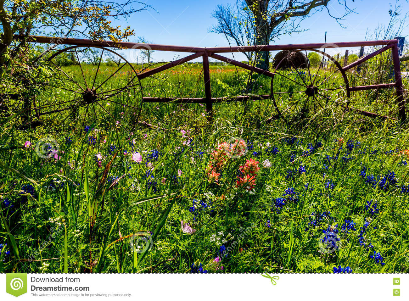 Download A Meadow With Round Hay Bales And Fresh Texas Wildflowers Stock Photo - Image of outdoor, animal: 76215466