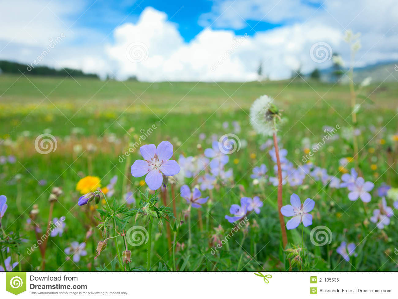 Meadow on a summer day