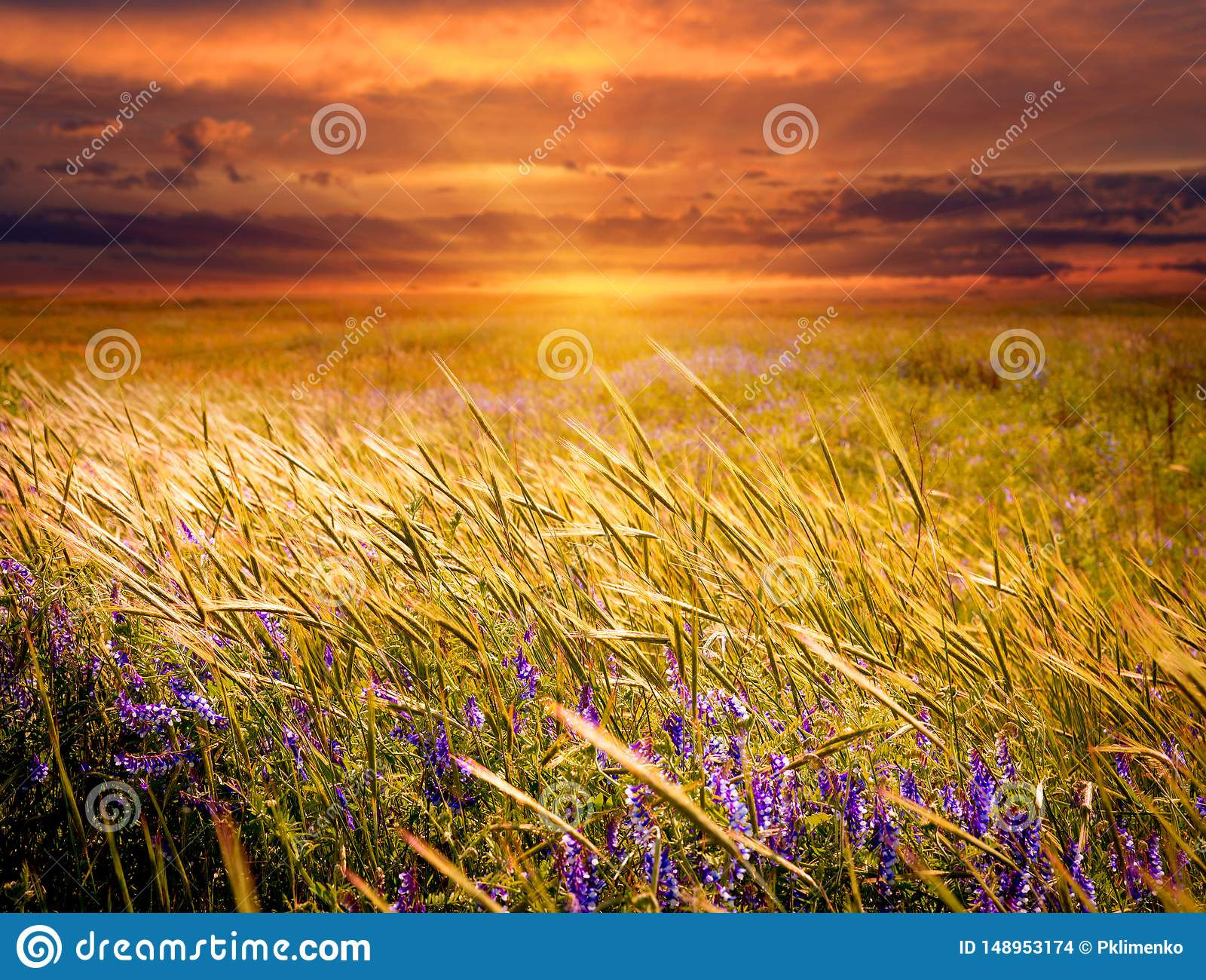 Meadow on sunset background