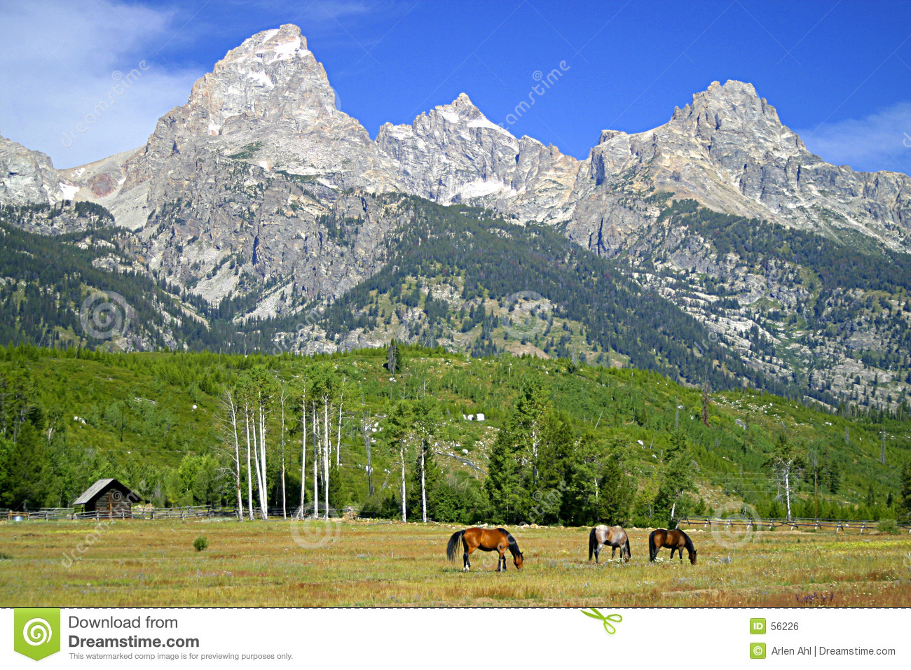 Meadow teton