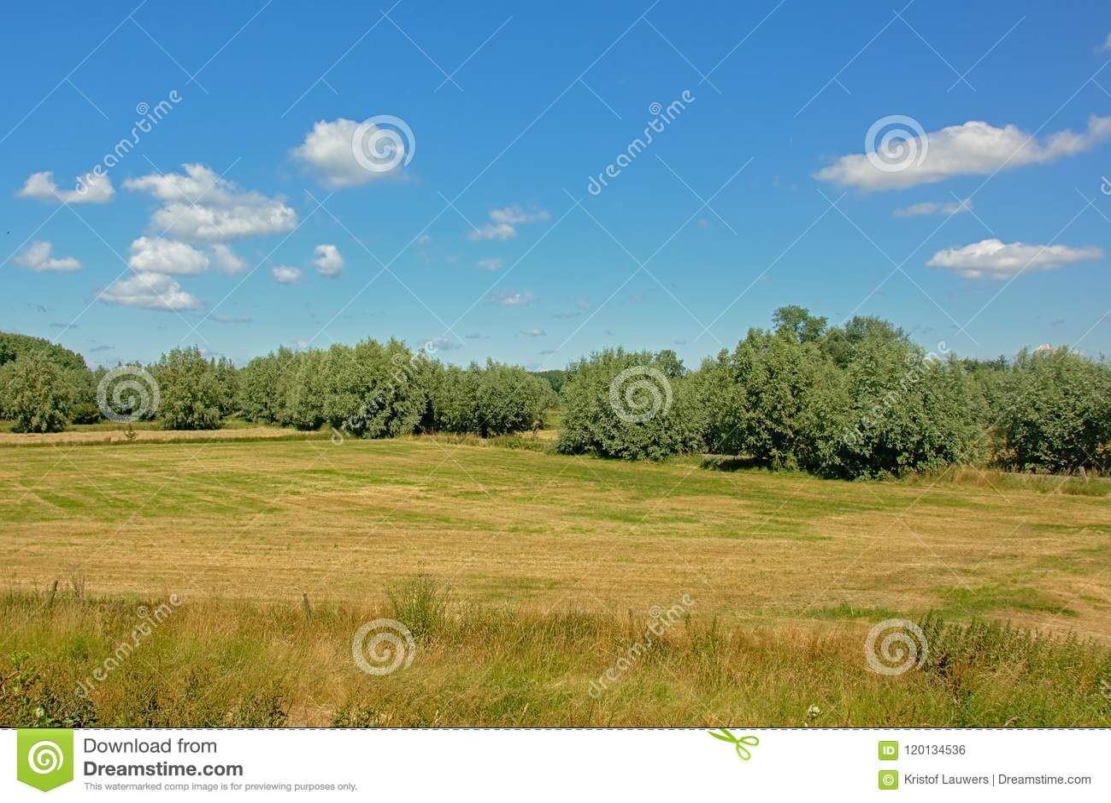 Meadow with trees under a clear blue sky in Kalkense Meersen nature reserve, Flanders, Belgium.