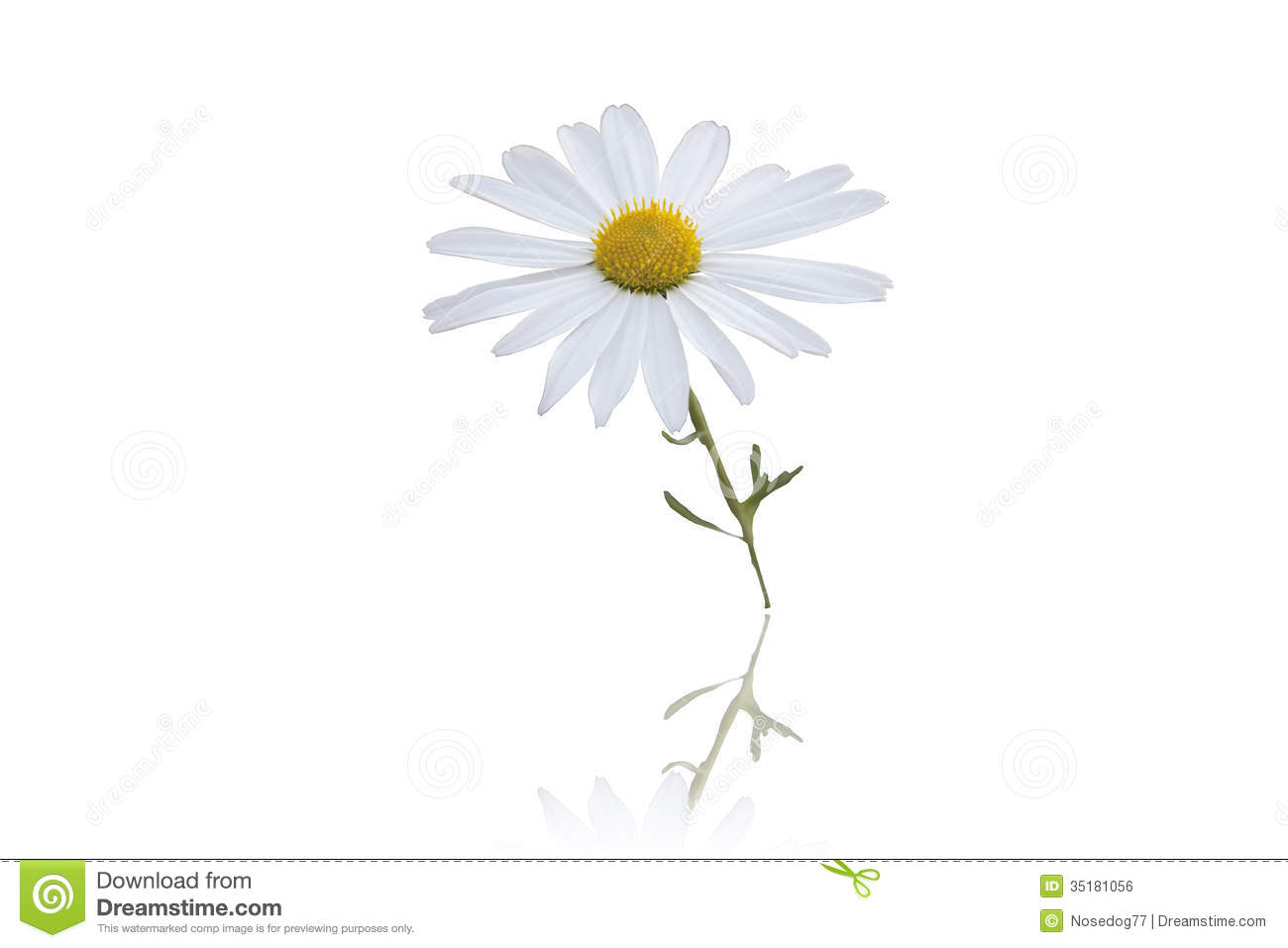 wild flower white background -#main