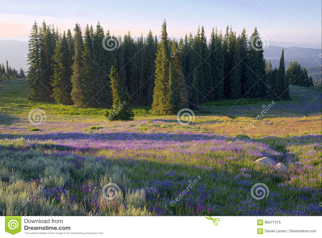 Meadow of wildflowers in Council Mountains